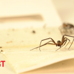 U.S. Pest Protection Explores Dangerous Biting Spiders Up Close & Personal